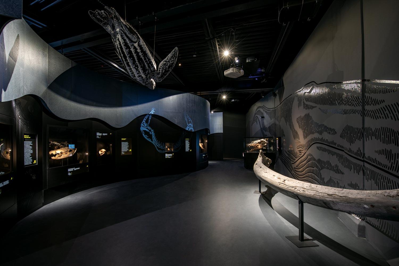 Saurier Giganten der Meere, Kaenozoikum, Lokschuppen Rosenheim
