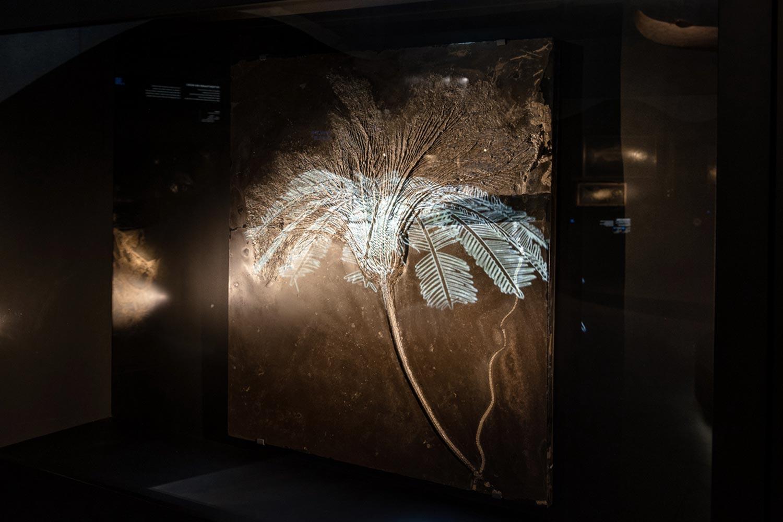 Saurier Giganten der Meere, bewegtes Fossil, Lokschuppen Rosenheim